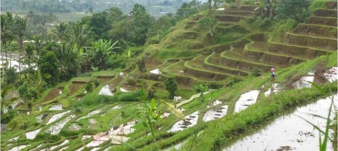eiland in indonesie