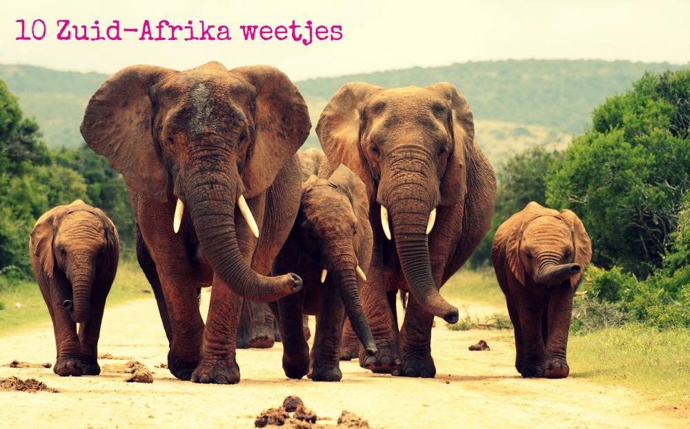 rule 34 afrika